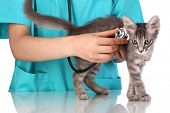 Veterinarian examining a kitten on blue background