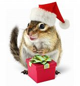 stock photo of chipmunks  - Chipmunk in red Santa Claus hat with gift box on white background - JPG