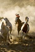 stock photo of buckaroo  - One Cowboy galloping and roping wild horses in the desert - JPG