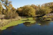 stock photo of stagnation  - Fall colors border a river
