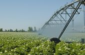 stock photo of potato-field  - An Idaho potato field irrigated by a pivot sprinkler system - JPG