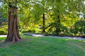 Big brown tree trunk on small green lawn among lush trees at botanical part of famous Valentino Park
