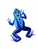 picture of orange poison frog  - colorful blue frog on white background - JPG