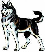 stock photo of husky sled dog breeds  - dog siberian husky breed - JPG