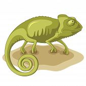 foto of chameleon  - Chameleon vector illustration isolated on a white background - JPG