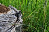 stock photo of crevasse  - Beetle on a cut tree with grass in the background - JPG