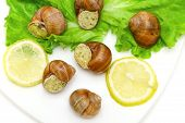 foto of butter-lettuce  - snails in butter sauce Parmesan lemon and lettuce on a plate on a white background - JPG