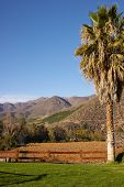 picture of hacienda  - Vineyards in the Limari Valley in Central Chile - JPG