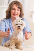stock photo of qigong  - Woman doing Reiki therapy for a dog - JPG
