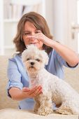 foto of qigong  - Woman doing Reiki therapy for a dog - JPG