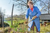 image of hoe  - Elderly woman wearing blue coat gardening with a hoe - JPG