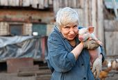 foto of household farm  - adult woman holding a small pig and looking the camera - JPG