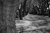 image of tree lined street  - Close - JPG