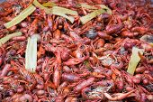 foto of acadian  - Boiled Crawfish - JPG