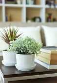 image of book-shelf  - Home decoration with plant and book shelf background - JPG