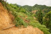 stock photo of landslide  - Close view of fallen trees and landslide in longsheng china - JPG