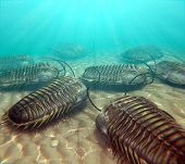 foto of exoskeleton  - An illustration of trilobites moving about on the bottom of a warm Paleozoic sea - JPG