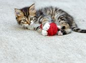 picture of snatch  - Little kitten playing with red ball of wool - JPG