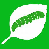 picture of green caterpillar  - Vector illustration of leaf with caterpillar on green background - JPG