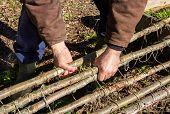 image of teepee  - Man beginning to lift a rustic teepee trellis for vegetable garden - JPG