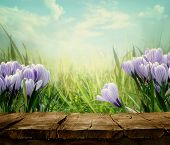 stock photo of meadows  - Spring background - JPG