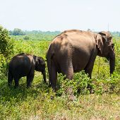 image of mother baby nature  - Elephant family - JPG