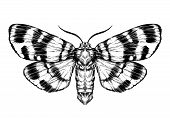 stock photo of sketche  - Butterfly  - JPG