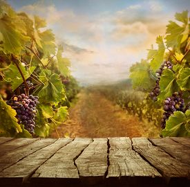 picture of wine grapes  - Vineyard tabletop design - JPG
