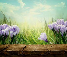 pic of garden-art  - Spring background - JPG