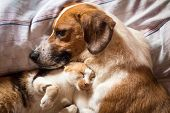 Dog And Cat Cuddle On Bed poster