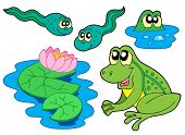 Frog collection on white background - vector illustration.