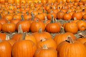 picture of cornicopia  - Pumpkin Patch Goodies - JPG