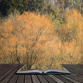 Beautiful Fine Art Landscape Of Orange Trees In Winter Coming Out Of Pages Of Open Story Book poster