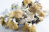 magic Mushrooms Containing The Psychoactive Substance Psilocybin poster