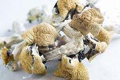 magic Mushrooms Containing The Psychoactive Substance Psilocybin poster