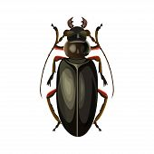 Titan Beetle. Vector Illustration Isolated On White Background poster
