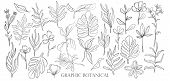 Hand Drawn Set Sketch Style Wild Flowers . Line Nature Style,drawing Flora,hand Drawn Botany. poster