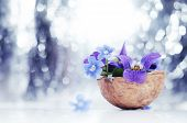 Floristic Composition With Violets And Forget-me-not Flowers In A Nutshell Against Beautiful Bokeh B poster
