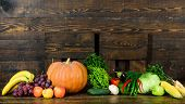 Vegetables From Garden Or Farm Close Up. Homegrown Vegetables. Fresh Organic Vegetables On Dark Wood poster
