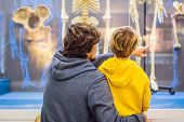Dad And Son Are Watching The Skeletons Of Ancient And Modern People. Human Evolution Is The Evolutio poster
