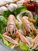 stock photo of norway lobster  - norway lobster with salad on dish - JPG