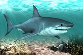 Shark Swims In The Waters Of The Ocean.big Shark In The Waters Of The Atlantic. poster