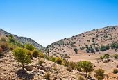 picture of golan-heights  - Mount Hermon on the Golan Heights Israel - JPG