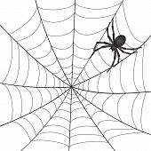 stock photo of spiderwebs  - A Spiderweb with Spider on white background - JPG