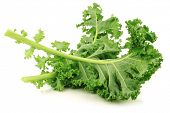 picture of kale  - freshly harvested  kale cabbage stems on a white background - JPG