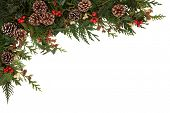 Christmas border of holly, ivy, mistletoe and cedar cypress leaf sprigs with pine cones over white b