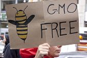 A close up of a sign that reads GMO Free with a drawing of a bee during a march against genetically