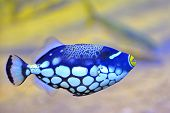 picture of saltwater fish  - colorful butterfly - JPG