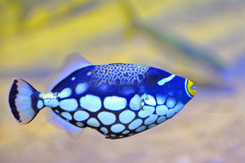 stock photo of butterfly fish  - colorful butterfly - JPG