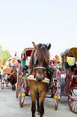 Horse carriages for tourist services